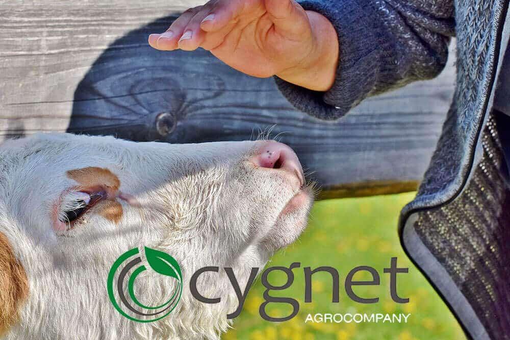 Агрохолдинг Cygnet впроваджує корпоративну систему управління закупівлями APS Smart