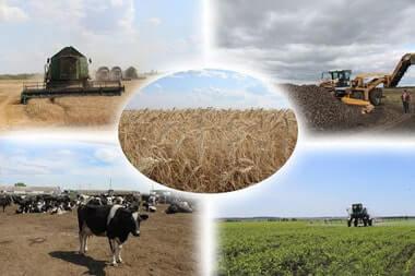 Вітаємо аграріїв з Днем працівників сільського господарства!